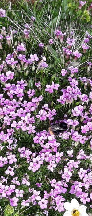 Appartements Schindler Blumen